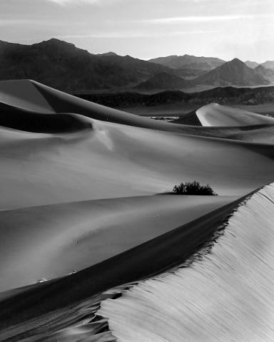 Desert Dune Ridge