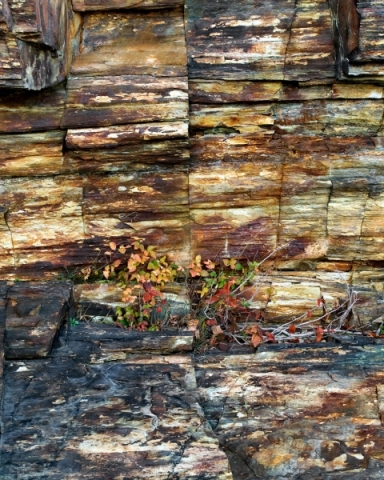 Fall Color on Cliff