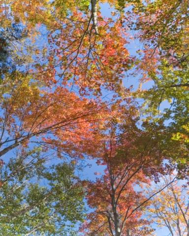 New England Canopy