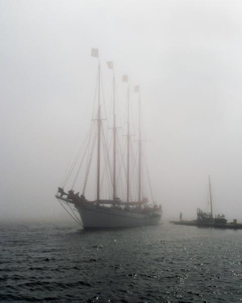 Fog in Harbor
