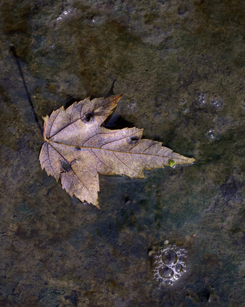 Single Leaf and Bubbles