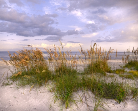 Last Light and Sea Oats