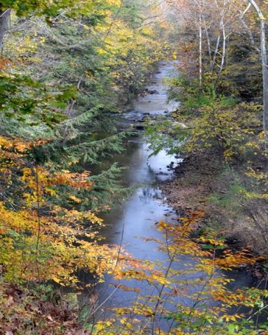 Mill Creek Stream