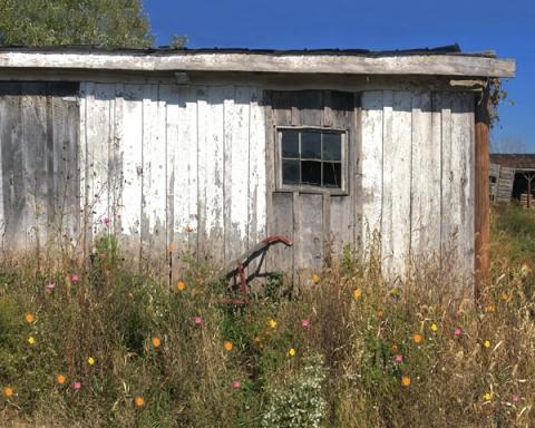 Ramshackled Barn