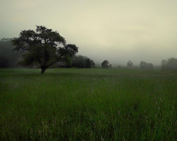 Misty Allegheny